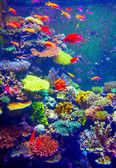 Coral Reef and Tropical Fish — Stock Photo