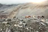 Trekking in Nepal — Stock Photo