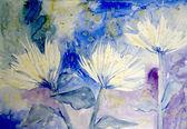 Chrysamthemums — Foto Stock