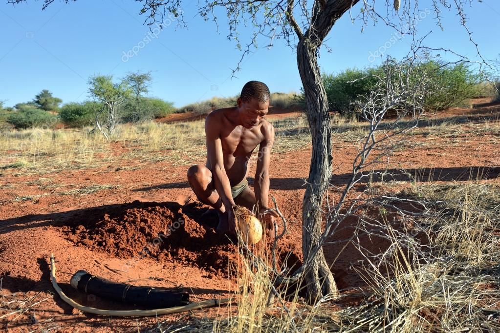 the san of the kalahari desert The san populated south africa long several thousand san people were still hunting large game with poisoned arrows and gathering plant food in the kalahari desert.