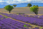 Provence landscape — Stock Photo
