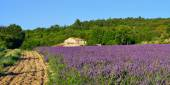 Provence rural landscape — Stock Photo