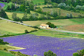 Provence rural landscape — Photo