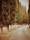 Cypress valley — Stock Photo