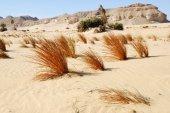Western desert, Sahara, Egypt — Stock Photo
