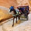 Horse carriage in a gorge, Siq canyon in Petra — Stock Photo #69915937