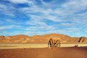 Ron desierto de wadi — Foto de Stock