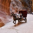 Horse carriage in a gorge, Siq canyon in Petra — Stock Photo #70820095