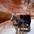 Horse carriage in a gorge, Siq canyon in Petra — Stock Photo #73118877