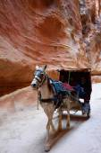 Horse carriage in a gorge, Siq canyon in Petra — Stock Photo
