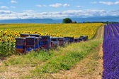 Provence landscape with apiary — Stock Photo