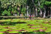 Jardin botanique de Pamplemousess à l'île Maurice — Photo