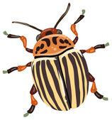 Colorado beetle — Vector de stock