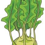 Illustration of fresh Kohlrabi — Stock Vector #68544577