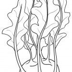 Sketch illustration of Kohlrabi — Stock Vector #68544583
