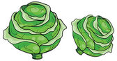 Illustration of two Cabbages — Vettoriale Stock
