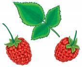 Fresh Raspberries illustration — 图库矢量图片