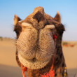 Camels in desert — Stock Photo #65495747