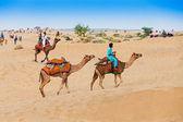 Camels in Thar desert — Stock Photo