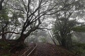 Fantasy forest, Madeira Island — Stock Photo