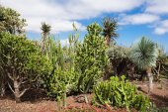 Botanical Gardens Madeira — Stock Photo