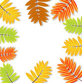 Background for a design with the autumn leaves of wild ash — Stock Vector