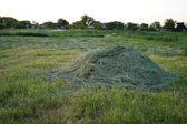 Harvest hay — Stock Photo