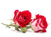 Bukiet czerwony kwiat róży — Zdjęcie stockowe