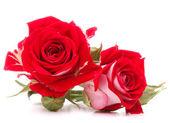 Bouquet di fiori rosa rossa — Foto Stock