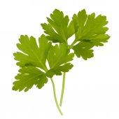 Fresh parsley herb leaves — Stock Photo