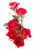 Ramo de flor rosa roja — Foto de Stock