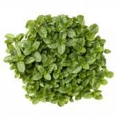 Fresh mint herb leaves — Stock Photo