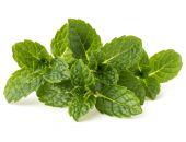 Fresh mint herb leaves — Stock fotografie