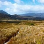 Trail through highland meadows in Tasmanian mountains — Stock Photo #70727603