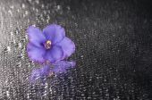 Light purple violet over wet grey background. — Стоковое фото