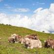 Swiss cows on the grass — Stock Photo #73000733