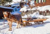 Horse carriage in swiss alps — Stock Photo