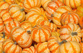 Colorful pumpkins collection — Stock Photo