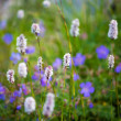 Flower natural short grass  background — Stock Photo #67261167