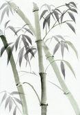 Aquarell von bambus — Stockfoto