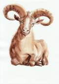 Ram watercolor painting — Stock Photo