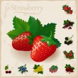 Vector berries vintage collection. Strawberry — Stock Vector #62085863