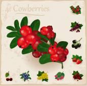 Vector berries vintage collection. Cowberries — Stock Vector