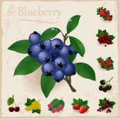 Vector berries vintage collection. Blueberry — Stock Vector