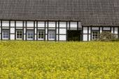 Rape field with timbered house in May, Lower Saxony, Germany, Europe — Stock Photo