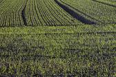 Paesaggio del campo in Bassa Sassonia, Germania — Foto Stock