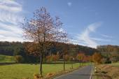 Cherry trees in autumn, country road in Holperdorp, Tecklenburg country, Germany — Stock Photo