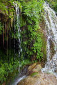 Close up Green Plants at the Water Falls — Stock Photo