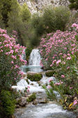 Pink Flower Plants and Trees at the Water Falls — Stock Photo