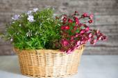 Basket Filled with Pink and White Flowers — Stock Photo